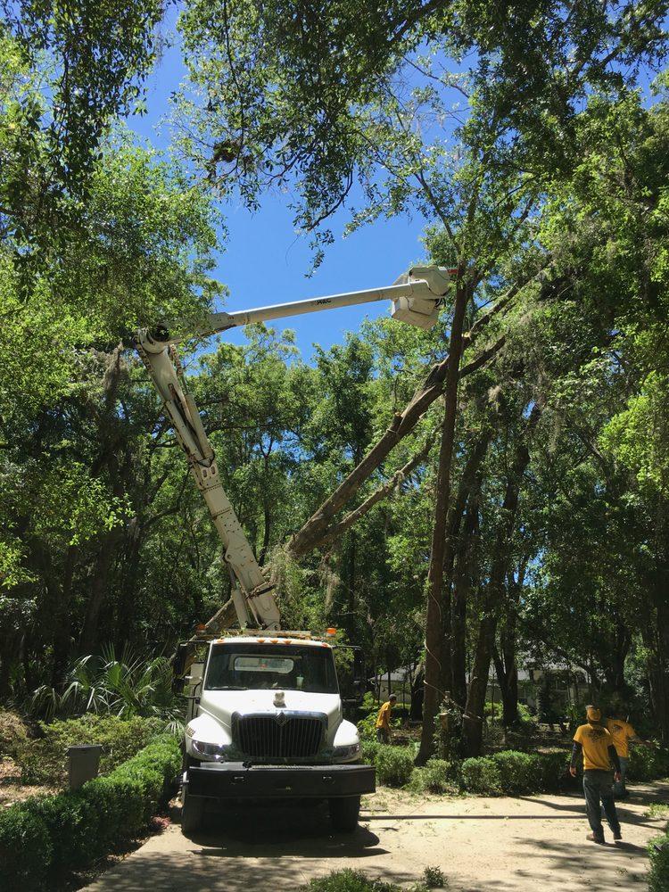 High Maintenance Tree Service: Dunnellon, FL