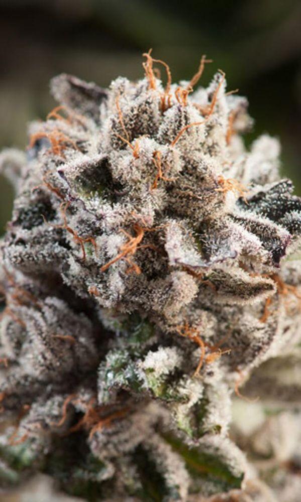 Lakeshore Cannabis: 2517 Sheridan Blvd, Edgewater, CO