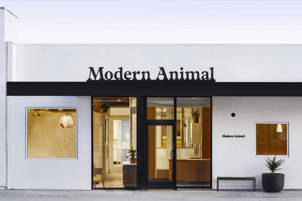 Modern Animal