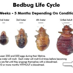 Delightful Photo Of Bed Bug Pest Prep NYC   New York, NY, United States.