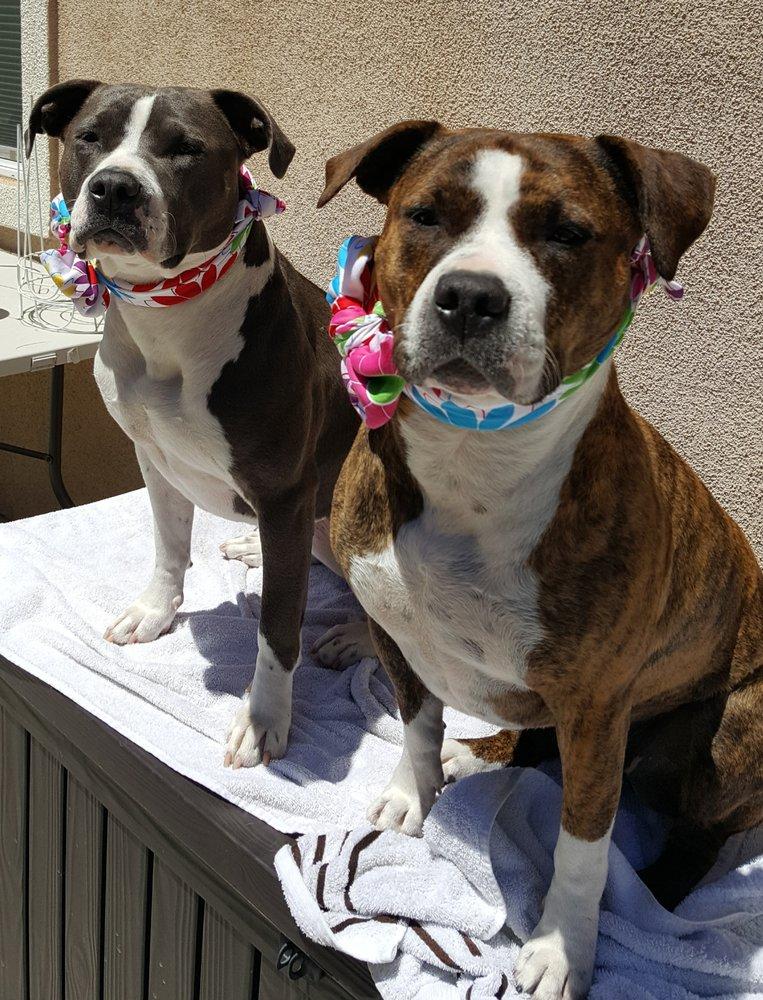 A Good Dog Day: 13699 Endicot Cir, Magalia, CA
