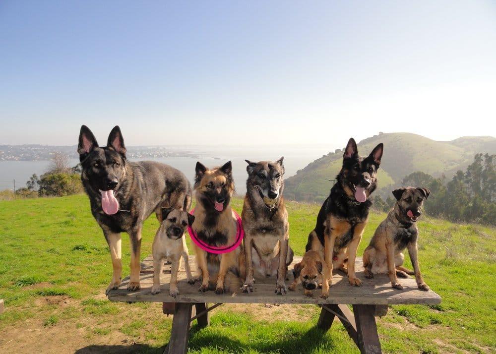 Dog Training San Francisco Yelp