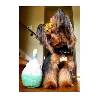 Dog Grooming Philadelphia Pa