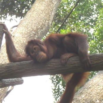 singapore zoo 398 fotos 80 beitr ge zoo 80 mandai lake rd mandai singapur singapore. Black Bedroom Furniture Sets. Home Design Ideas