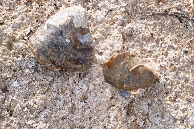 Muleshoe National Wildlife Refuge: 1531 County Rd 1248, Muleshoe, TX