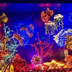photo of garden dlights bellevue wa united states - Bellevue Christmas Lights