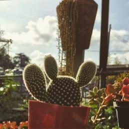 Photos For San Gabriel Nursery Amp Florist Yelp