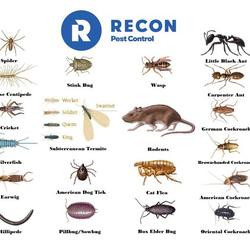 Recon Pest Control Inc 13 Reviews Pest Control 506