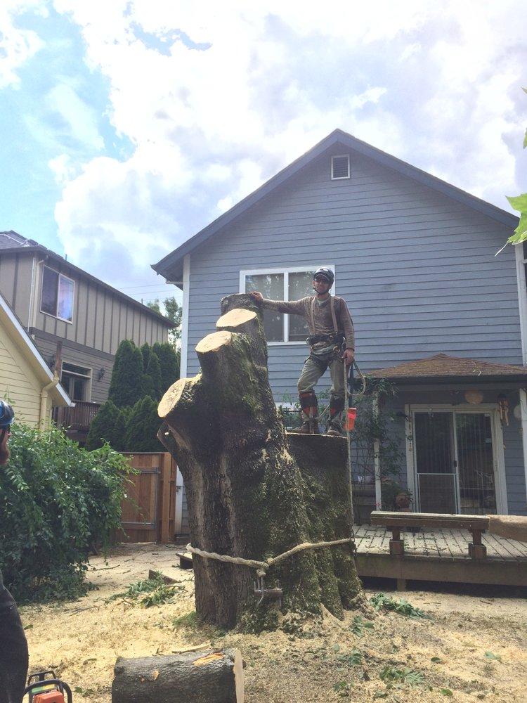 Ascent Tree and Yard Care