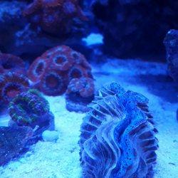 Your Reef Aquarium - 33 Reviews - Aquarium Services - 199 Cirby Way ...