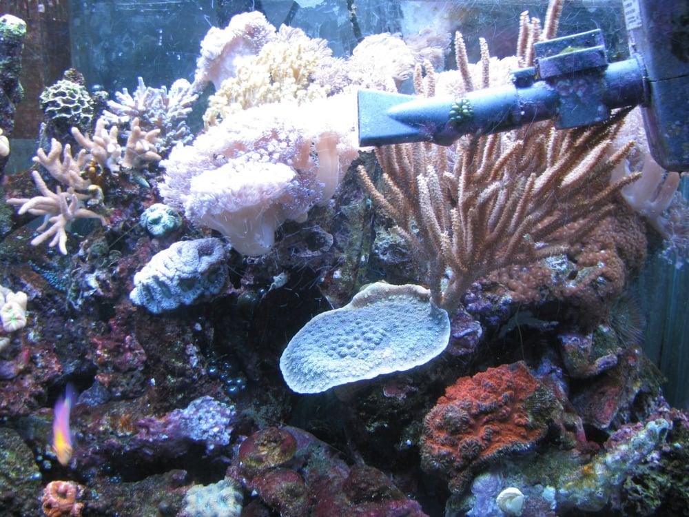 Kingfish Aquarium Service: 2360 Garland St, Lakewood, CO
