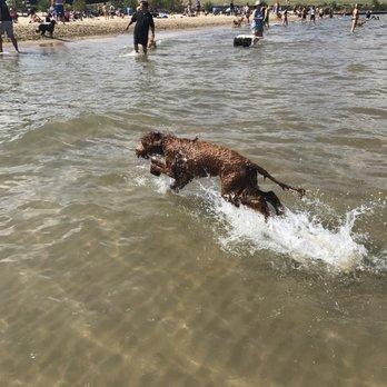 Montrose Dog Beach - 350 Photos & 254 Reviews - Dog Parks