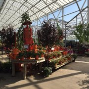 Attractive Displays For Summer Photo Of Petitti Garden Centers   Avon, OH, United  States.