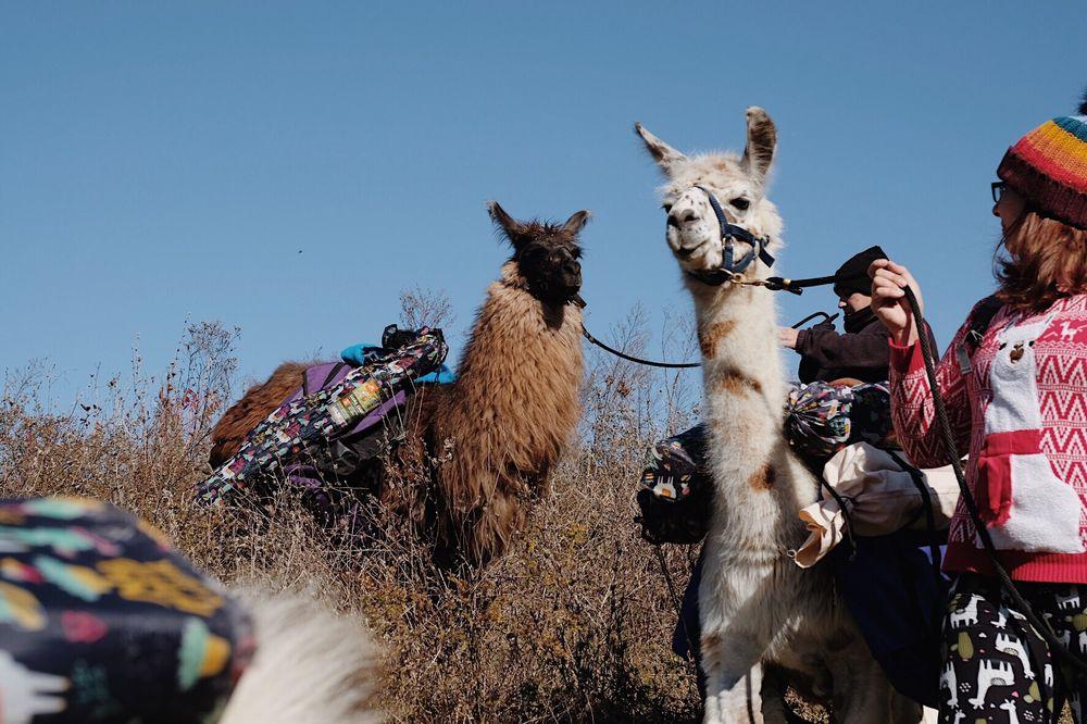 Social Spots from The Wandering Llamas