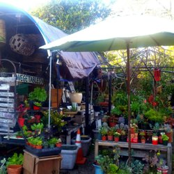 Photo Of Carpinteria Landscape Nursery Ca United States A Feast For