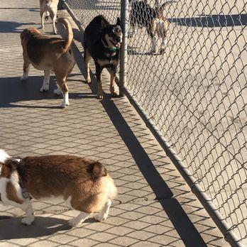 Dog Plays Too Rough At Dog Park