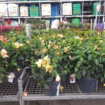 The Home Depot 15 Photos Nurseries Gardening 12621 Mccall Rd