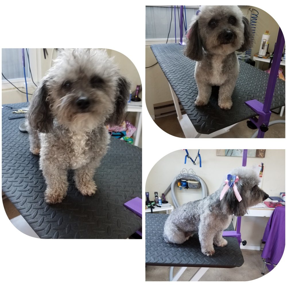 Puppy Love Grooming: 9627 3200th Rd, Hotchkiss, CO