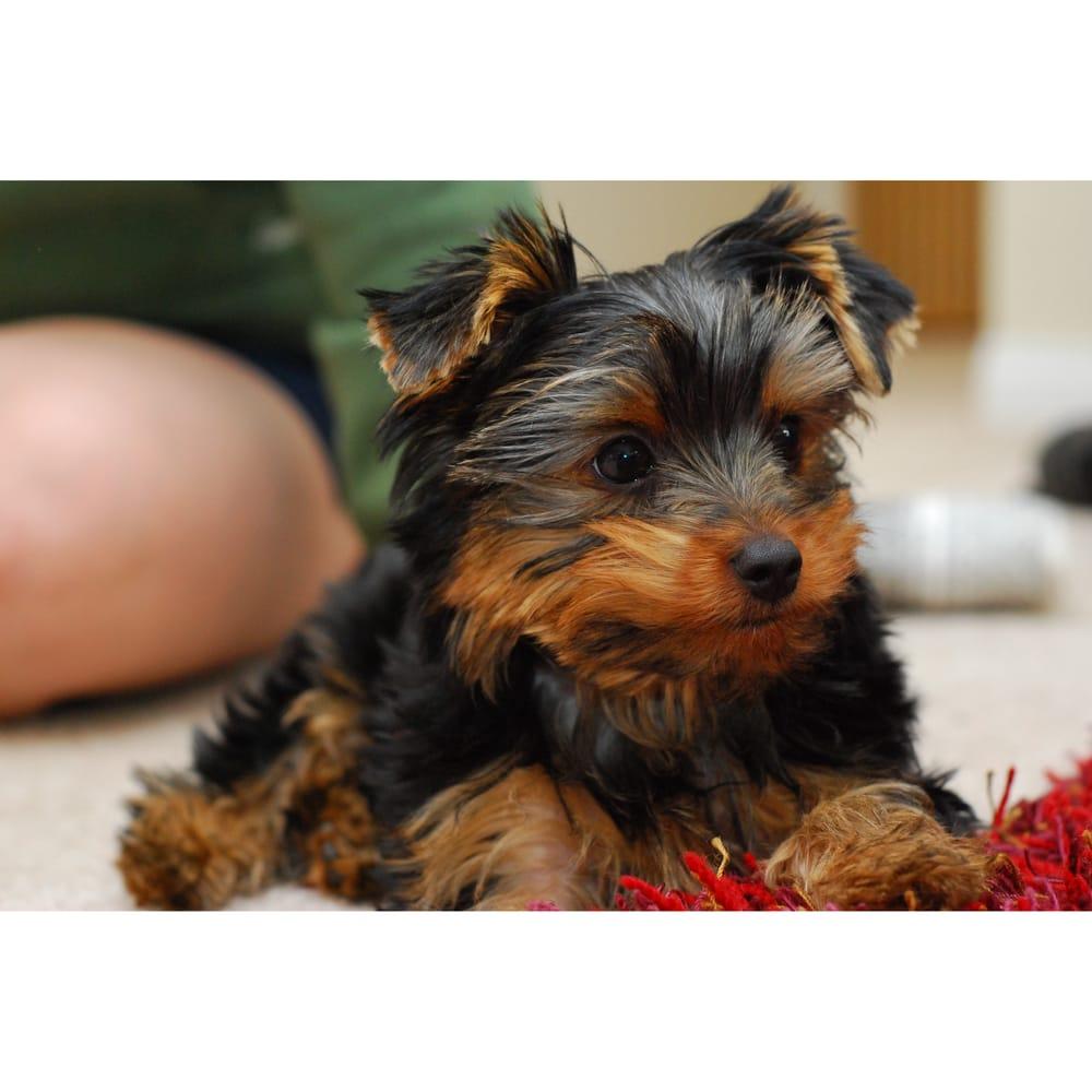 Puppy Pride Kennel of Louisiana: Walker, LA