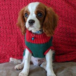 Hello Puppies 28 Photos 42 Reviews Pet Breeders 41125