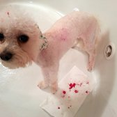 PetSmart - 20 Photos & 16 Reviews - Pet Stores - 4155 Austell Rd ...