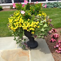 Photo Of Bloom Container Gardens   Lancaster, PA, United States. Summer  Patio Pot