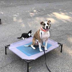 dog training cincinnati