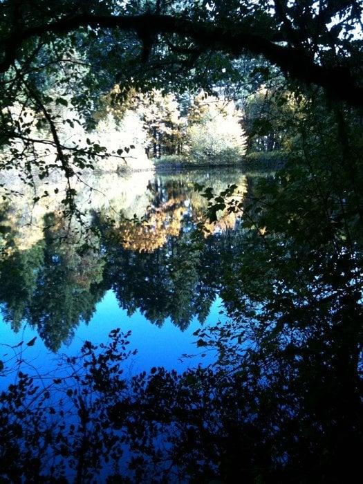 Peavy Arboretum: NW Peavy Arboretum Rd, Corvallis, OR