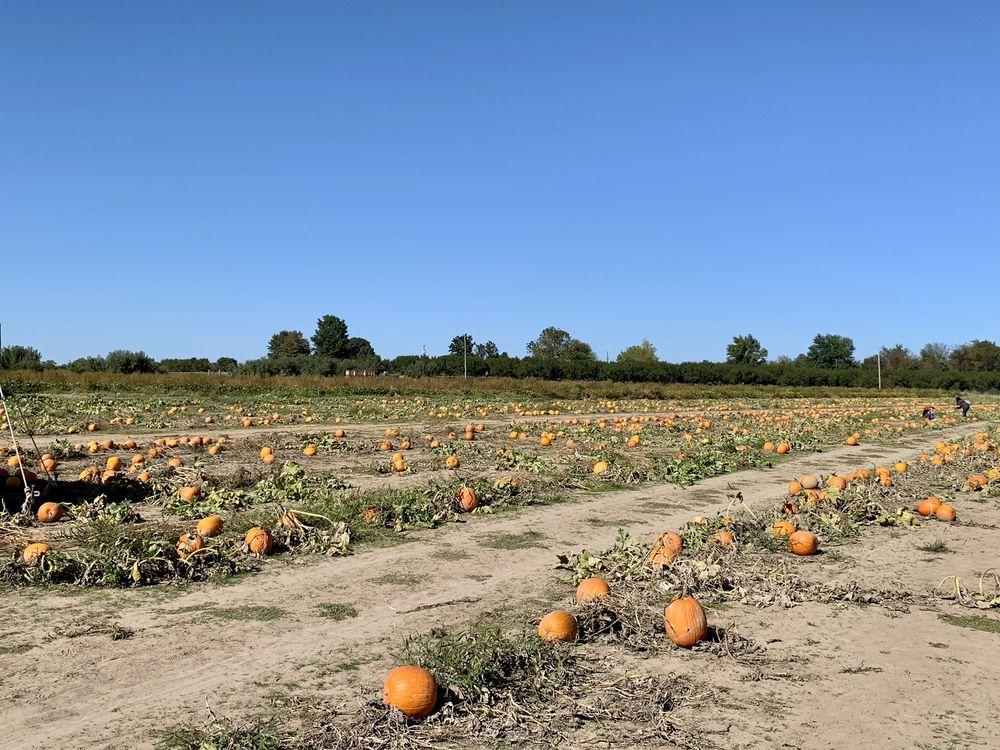 Livesay Orchards: 39232 E 231st St S, Porter, OK