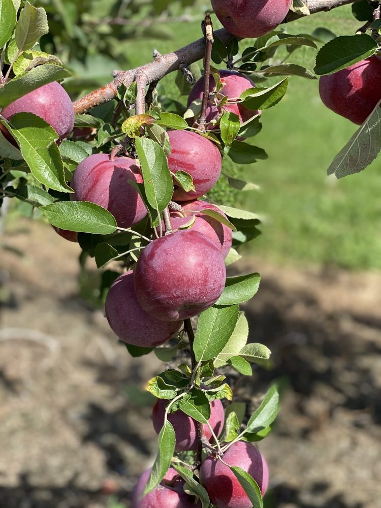 Rogers Family Orchards: 260 County Hwy 131, Johnstown, NY