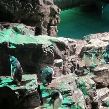 New england aquarium aquariums waterfront boston ma New england aquarium tickets