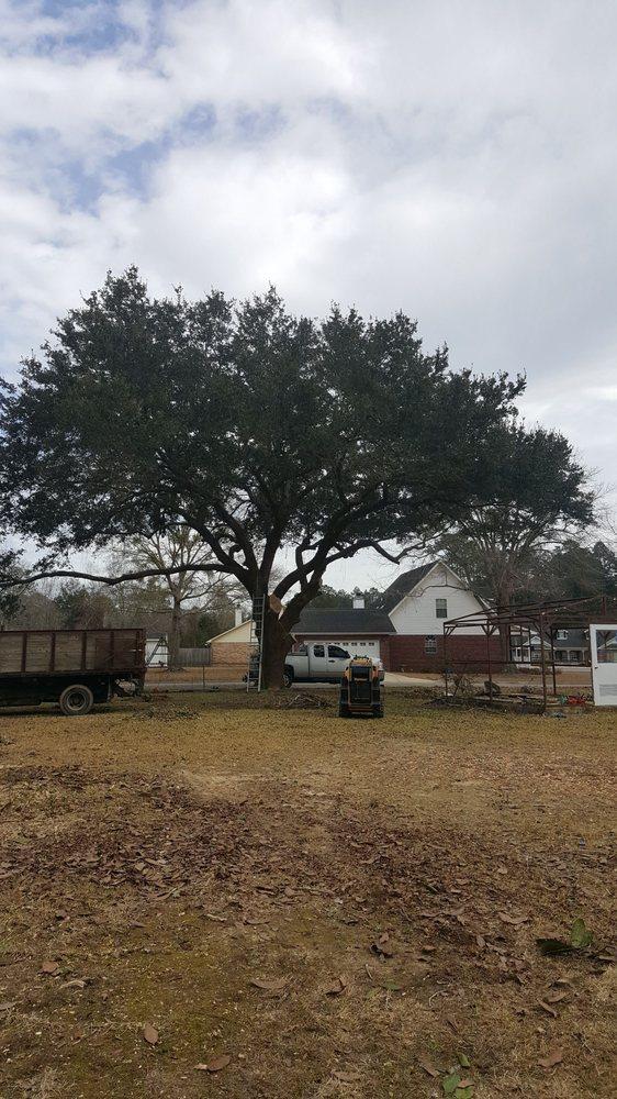 Bob Ross Tree Service: 1406 E Olive Rd, Pensacola, FL