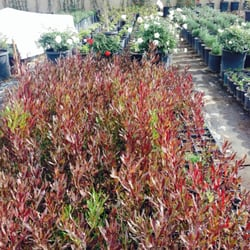 Bon Photo Of Gardena Nursery #2   Gardena, CA, United States. Beautiful