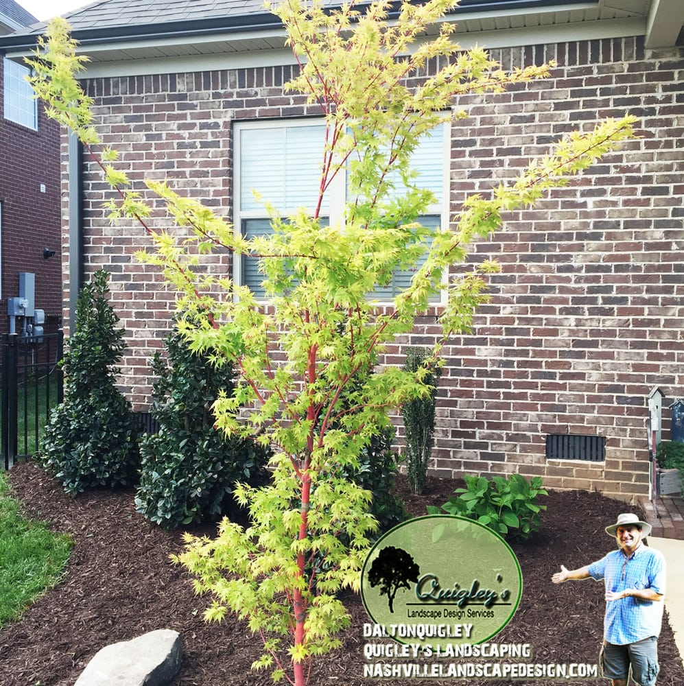 Nashville landscape design installed. Privacy plants pool area ...