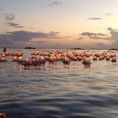 lantern floating hawaii memorial day 312 photos 45 reviews