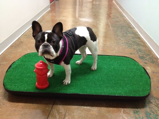 Potty Training School For Dogs Near Me