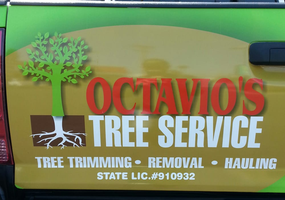Octavio's Tree Service & Stump Grinding