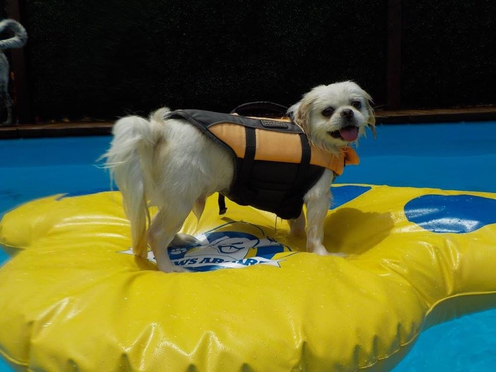Pampered pet inn 60 photos 26 reviews pet boarding for Dog boarding places near me