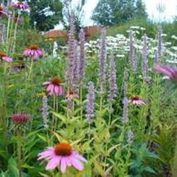Photo Of Organic Garden Design   Sterling, MA, United States.  Organicgardendesign.us