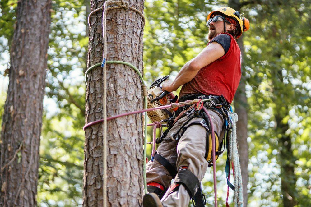 Truetimber Arborists, Inc.: 4050 Transport Pl, Richmond, VA