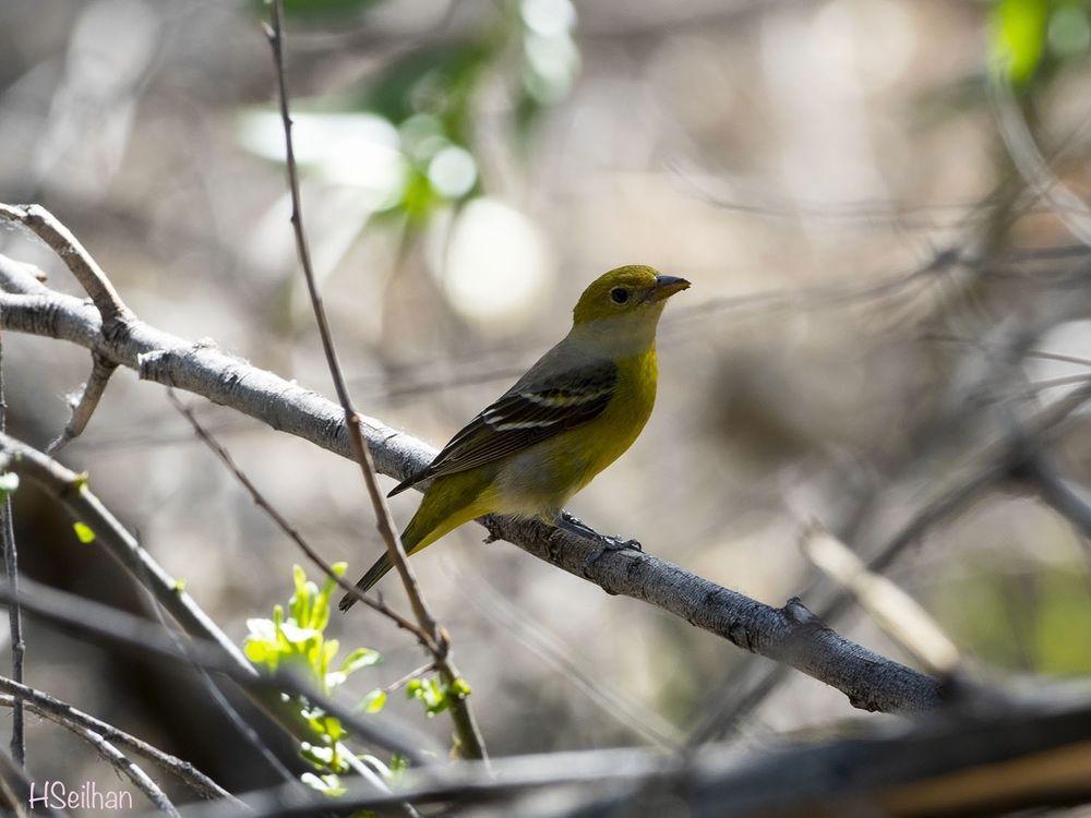 Big Morongo Canyon Preserve: 11055 East Dri, Morongo Valley, CA