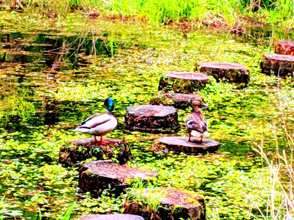 Taylor Memorial Arboretum: 10 Ridley Dr, Wallingford, PA