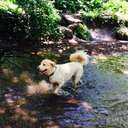 Greenburgh Dog Park