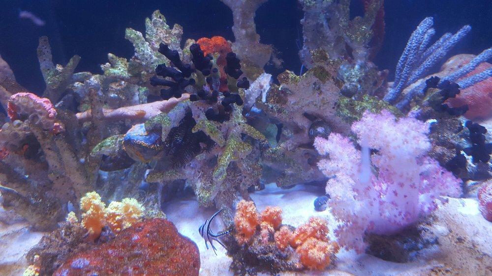 Photos For Seaquest Interactive Aquarium Yelp