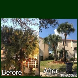 Photo Of Go Green Affordable Tree Service Miami Fl United States