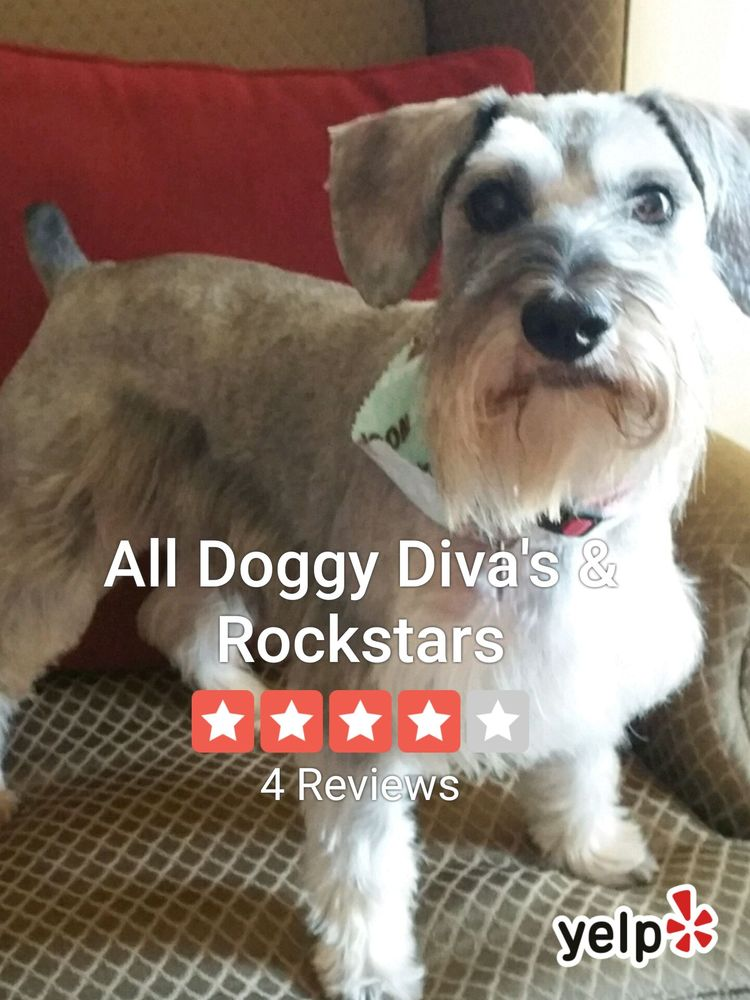 All Doggy Diva's & Rockstars: 158 W Woodruff Ave, Crestview, FL