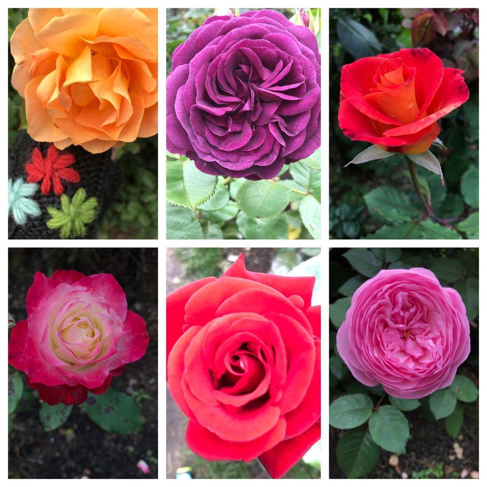International Rose Test Garden: 400 SW Kingston Ave, Portland, OR