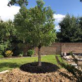 Photo Of Moon Valley Nurseries Spring Tx United States Camphor Tree