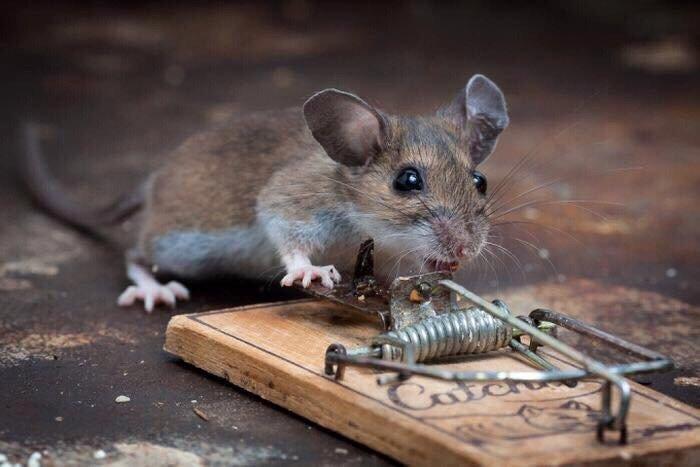 Amigos Pest Solution: Joliet, IL