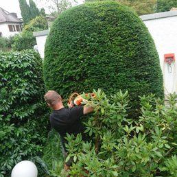 Evergreen Gartenbau gartenbau hecher tree services penzberger str 7 sendling
